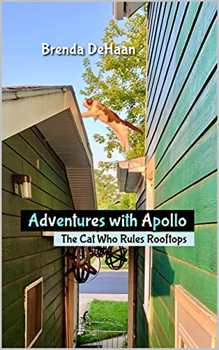 Adventures with Apollo: The Cat Who Rules Rooftops